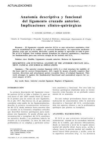 El Ligamento cruzado anterior: morfología y función