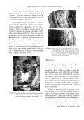 Morfologia dos dentes do bicho-preguiça de coleira ... - Biotemas - Page 7