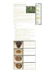 Keime und Sprossen: Alfalfa - Zentrum der Gesundheit