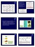Morte Celular Programada - Unesp - Page 2