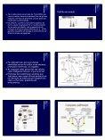 Morte Celular Programada - Unesp - Page 3