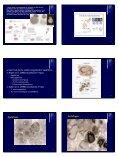 Morte Celular Programada - Unesp - Page 4