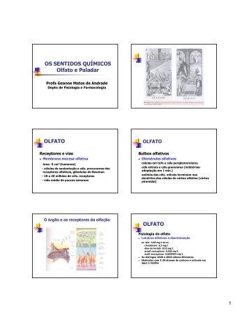 Sentidos Químicos - Departamento de Fisiologia e Farmacologia ...