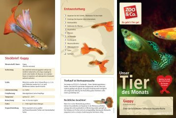 Steckbrief: Guppy Erstausstattung - Zoo & Co