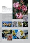 Garten-Revue - Widmer Gartenbau - Seite 2