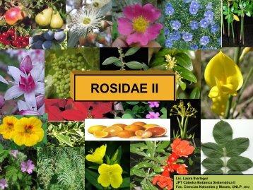 Rosidae II (Presentación 2012) - Facultad de Ciencias Naturales y ...