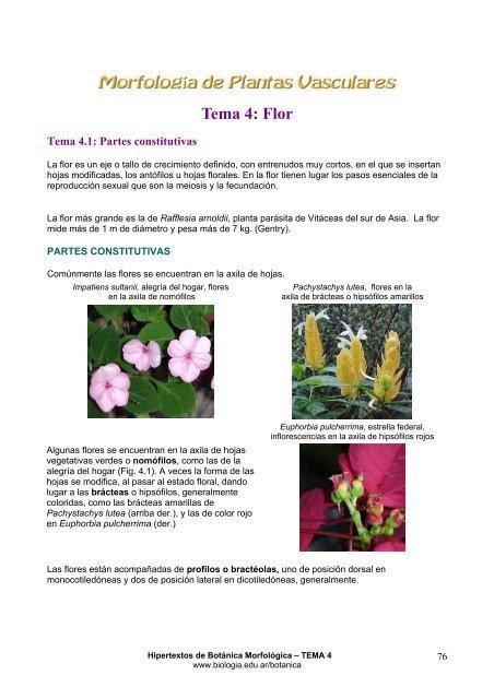 Tema 4 Flor