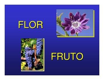 Flor-fruto