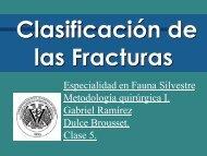 Clasificación de Fracturas