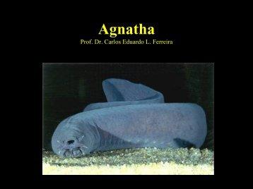 Agnatha - UFF