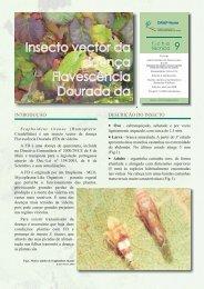 Documento - Instituto dos Vinhos do Douro e Porto