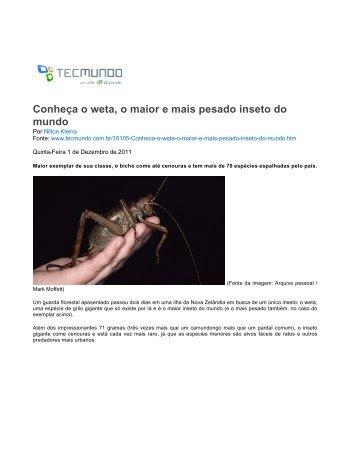 Conheça o weta, o maior e mais pesado inseto do mundo - TecMundo