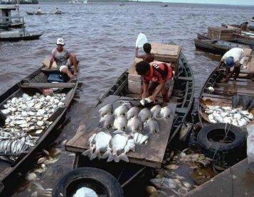 Peixes comerciais Manaus (Vol 4) - laboratório de zoologia - ufam