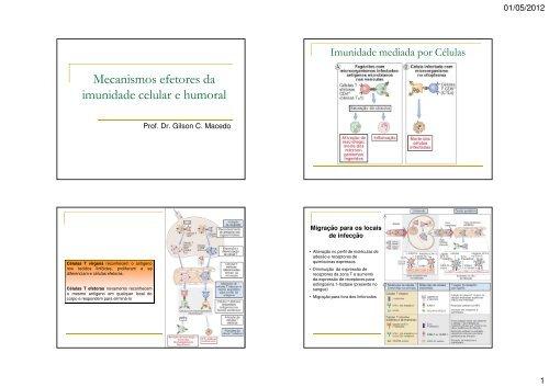 Mecanismos efetores da imunidade celular e humoral