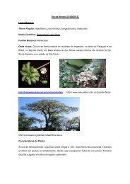 Dia da Árvore (21/09/2012) Louro Branco: Nome Popular ... - UFMT