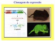 Clonagem de expressão - Biologia Molecular e Genética