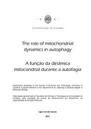 The role of mitochondrial dynamics in autophagy A função da ...