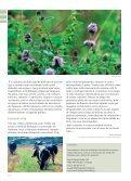 Reserva Ornitológica de Mindelo - 2Pontos - Page 3