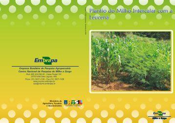 Plantio do milho intercalar com a leucena - Embrapa Milho e Sorgo