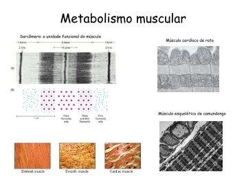 Aula 22 - Metabolismo Muscular
