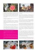 Cuarta semana micolóxica - Page 3