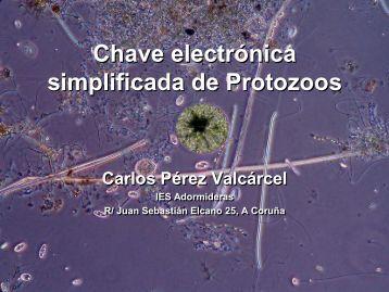 Chave electrónica simplificada de Protozoos