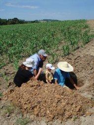 Download PDF - AgriCultures Network