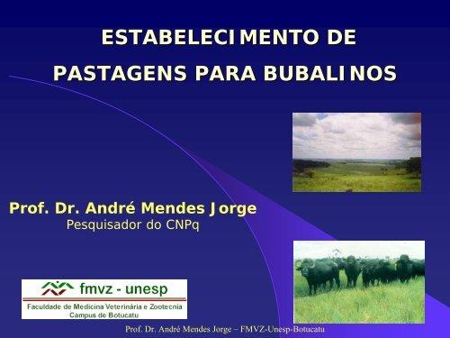 Estabelecimento de Pastagens para Bubalinos - Unesp