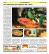 Jornal Maranduba News - Page 6