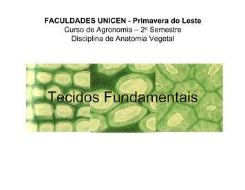 Tecidos fundamentais - anatomia vegetal