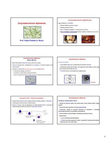 Corynebacterium diphteriae e Neisseria meningitidis - UFF