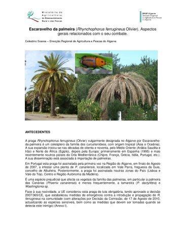 Escaravelho da palmeira (Rhynchophorus ... - DRAP Algarve