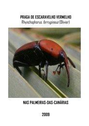 Praga de Escaravelho Vermelho - Câmara Municipal de Albufeira