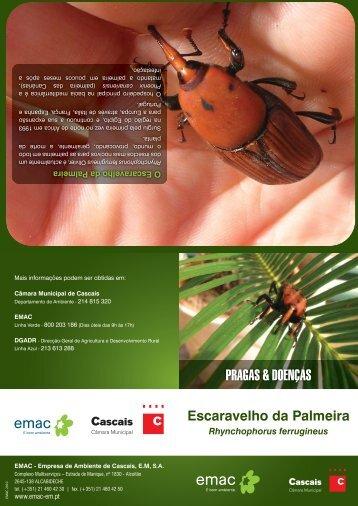 Folheto do escaravelho da palmeira - Câmara Municipal de Cascais