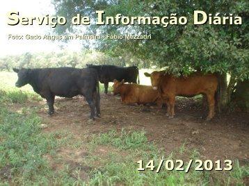 Serviço de Informação Diária 14/02/2013