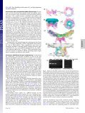 Structure and assembly of the essential RNA ring component of a ... - Page 3