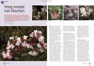 T&L Vroeg voorjaar met Viburnum 6/2008 - Tuin & Landschap