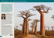 Madagaskar – Der unbekannte 8. Kontinent - Zoo Zürich
