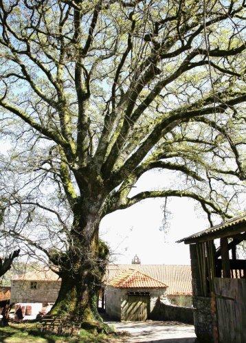 18 árbores - Medio Rural