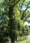 18 árbores - Medio Rural - Page 3