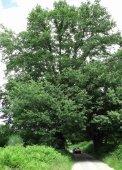 18 árbores - Medio Rural - Page 5