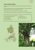 18 árbores - Medio Rural - Page 6