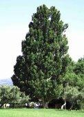 18 árbores - Medio Rural - Page 7