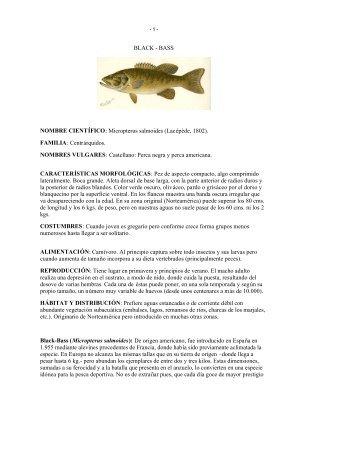 BLACK - BASS NOMBRE CIENTÍFICO: Micropterus salmoides ...