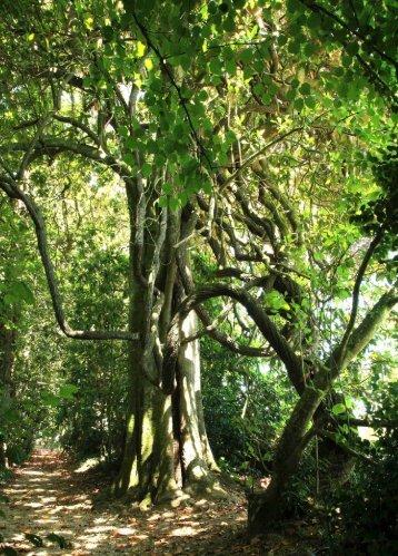 12 árbores - Medio Rural - Xunta de Galicia