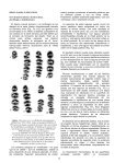 La variación del diseño oclusal inferior en Boromys torrei (Rodentia ... - Page 4