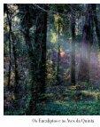 Os Eucaliptos e as Aves da Quinta de São Francisco - Page 4
