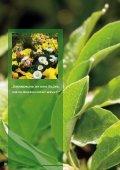 Download Prospekt Dauergrabpflege - Gesellschaft für ... - Seite 6