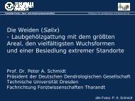 Salix - Deutsche Dendrologische Gesellschaft