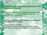 DDG/GDA-Projekt Rekordbäume/Champion Trees Beispiele aus ...